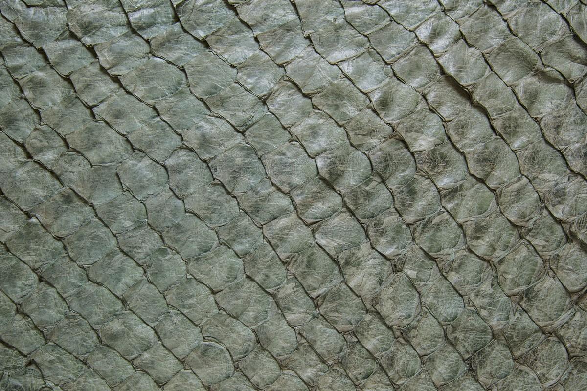 Pele de Peixe PIRARUCU Cor Verde